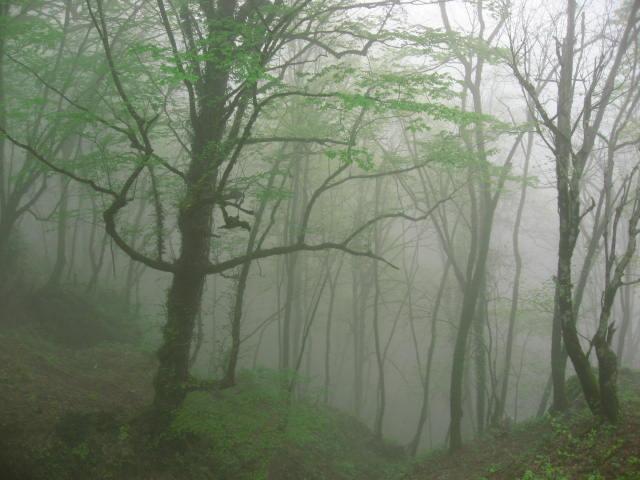 Bosque Masuleh