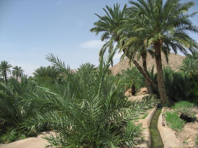 palmeras garmeh