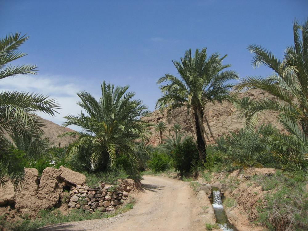 palmeras garmeh 3
