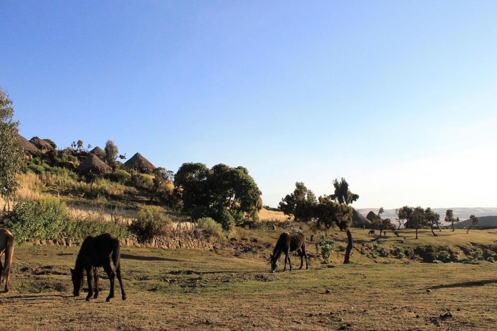 aldea etiope