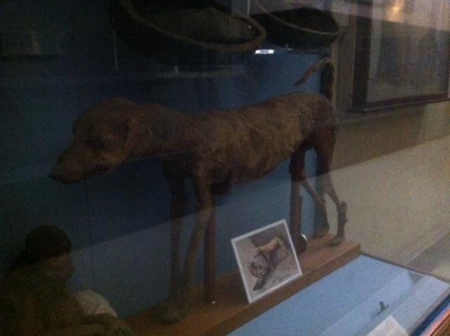 momia perro