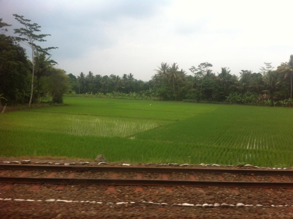 arroz tren jakarta