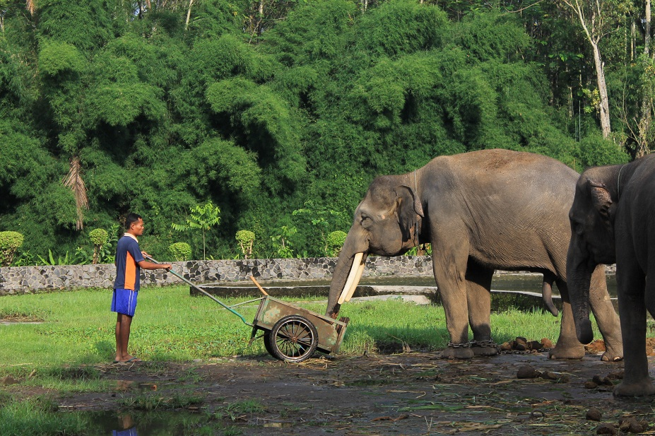 elefante feliz