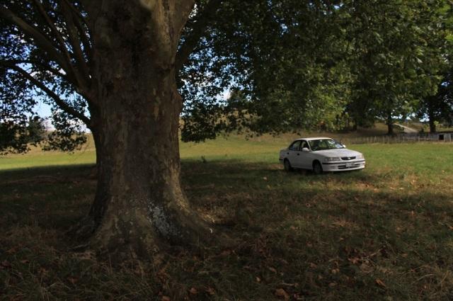 coche arbol