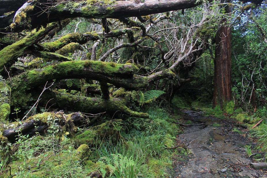 bosque nz