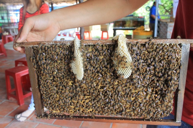 abejas mekong